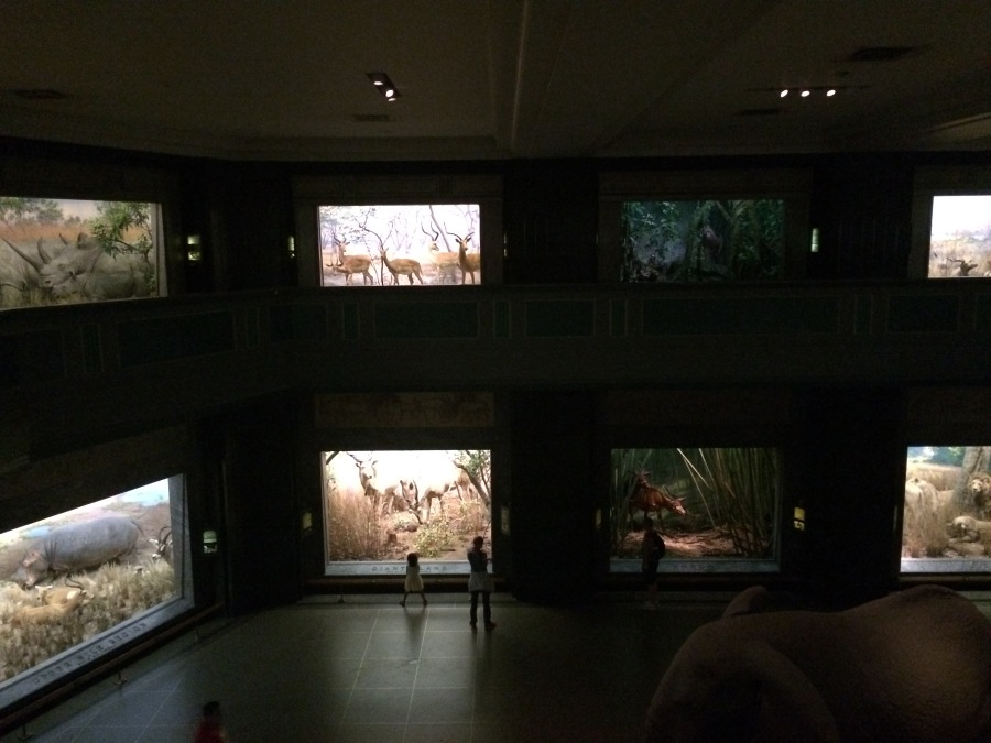 2-story wide shot at AmMusNatHistory NYC Arran Henderson