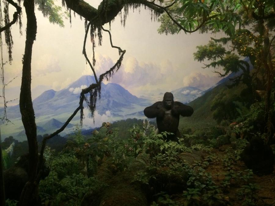 Gorilla at AmMusNatHistory NYC Arran Henderson