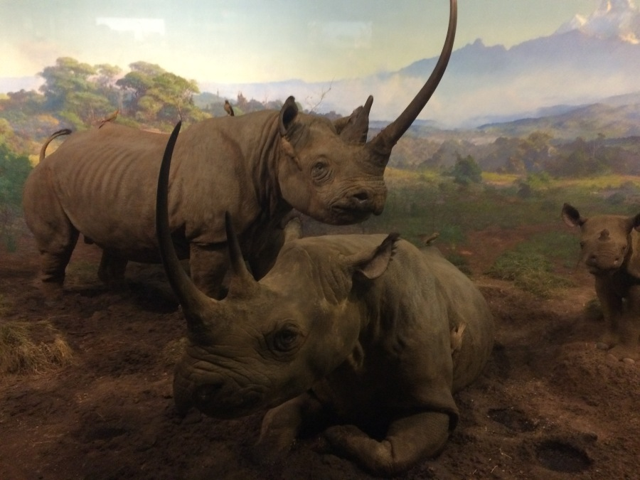 Rhino at AmMusNatHistory NYC Arran Henderson